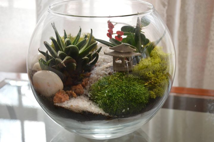 Terrarium workshop bangalore