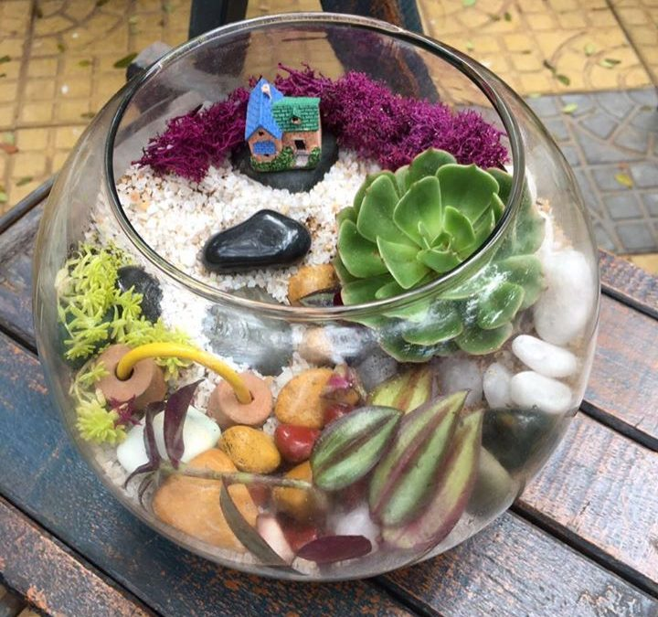 Terrarium workshop (Bangalore)
