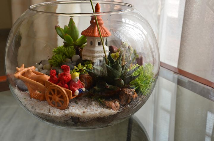 Terrarium making workshop in Bangalore
