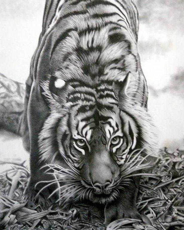Wildlife charcoal sketching