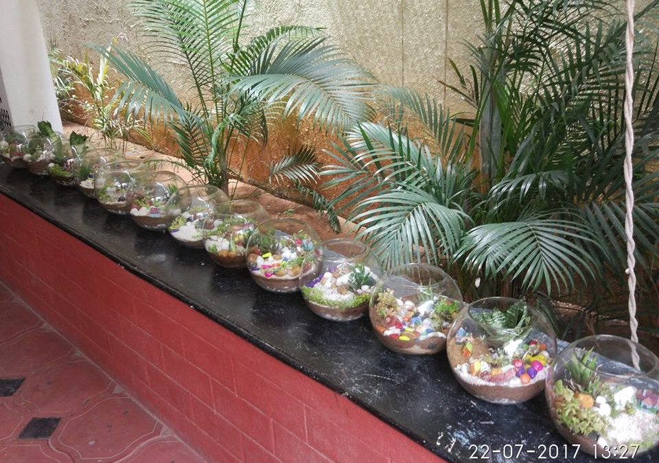 Go Green – DIY Terrarium (Small glass gardens)