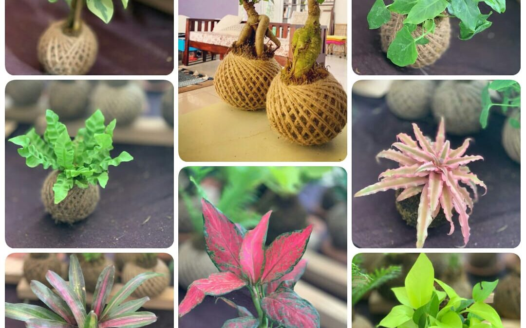 Kokedama Workshop for Beginners in Bangalore